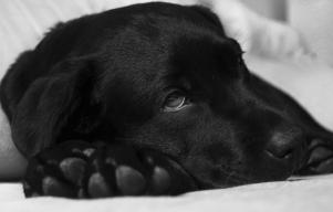 Kennel cough: Does your dog have it?