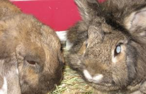 5 signs your rabbit is blind, and how to keep them safe