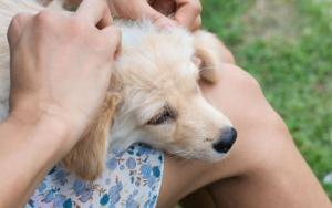 11 ways to protect your dog from ticks