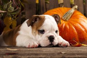 Protect your pets: Our top tips for keeping your pet safe this Halloween