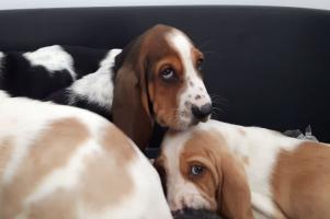 All 96 designer puppies rescued at Dublin Port have foster homes