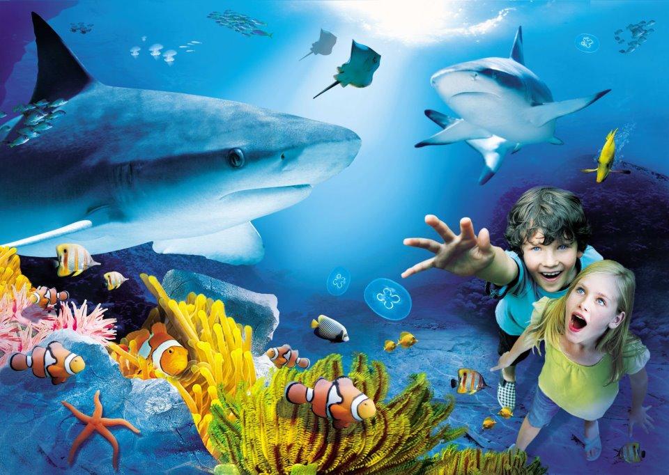 The National Sea Life Centre Bray