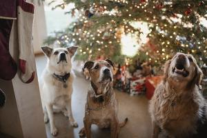 Dogs Trust reveal nearly 200 people asked to return their dogs after Christmas