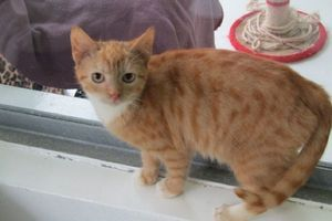 ISPCA seeks publics help in re-homing 44 cats that were found in Meath