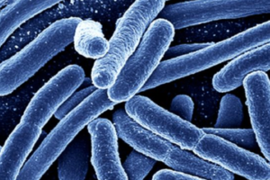 HSE issues warning after an outbreak of Ecoli infections