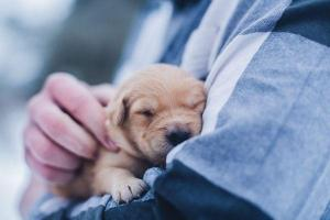 Attention all dog owners: Dogs Trust study is looking for puppy participants