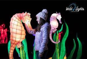 Win a family pass to Wild Lights at Dublin Zoo