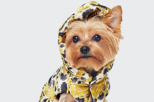 Dog lovers, Moschino and H&Ms new collaboration is for you