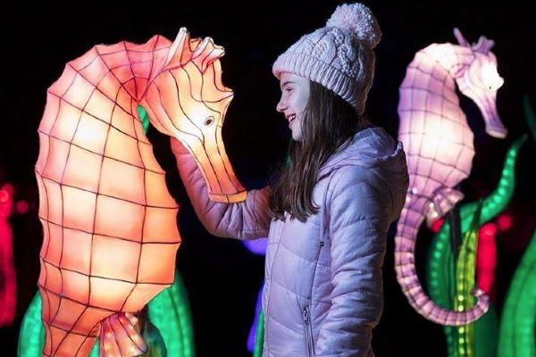 Dublin Zoo has CANCELLED tonights Wild Lights event