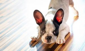 Keep the calm! 5 things to remember when bringing your nervous puppy home