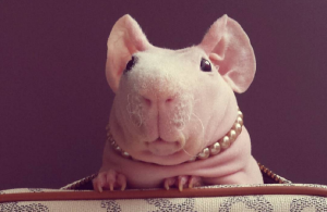 6 animal Instagram accounts that are guaranteed to make you smile