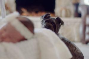 Babys best friend: How to introduce your newborn to the family dog
