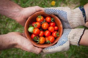 The INCREDIBLE reason why we should all be eating tomatoes