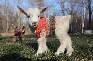 Bad day? Well, here are some tiny animals wearing tiny jumpers