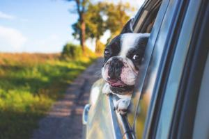 HOT DOGS! How to keep your family pet safe in the warm summer weather