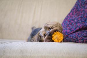Barking mad because of shedding? 5 ways to keep you home clean and pet-friendly